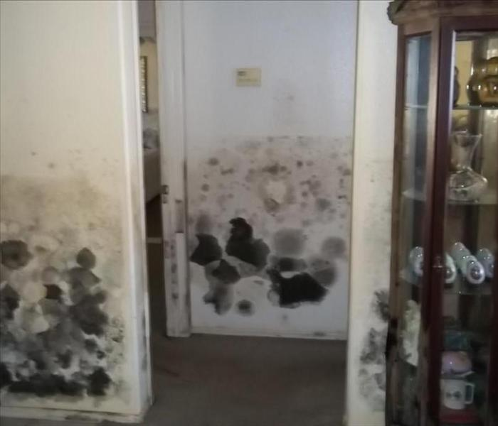 Home flooded, and turned into mold Casa Grande, AZ Before