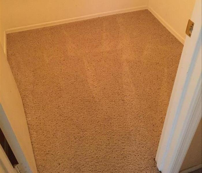 Commercial New and Improved carpet cleaning