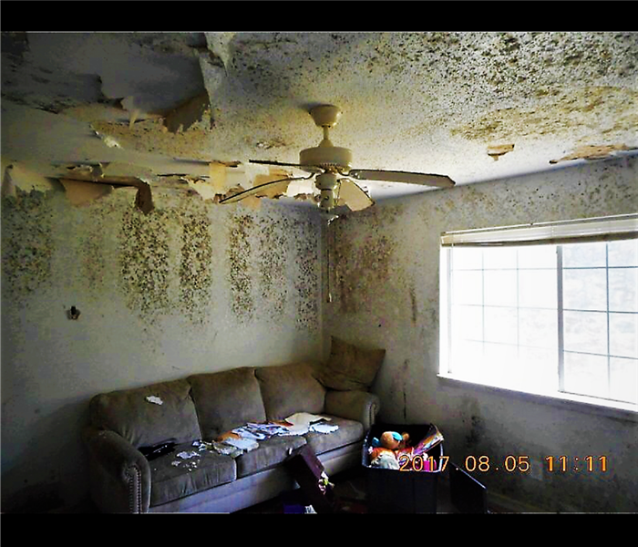 Mold Remediation Mold in an apartment